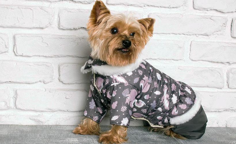 комбинезон для собак из дюспо