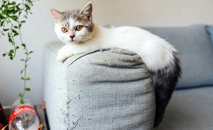 диван из рогожки минусы